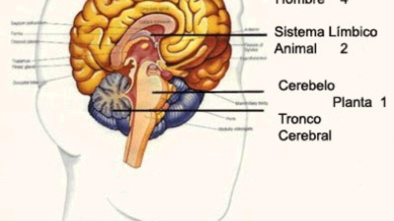 Cerebro Mente Conciencia Filosofía Para La Vida