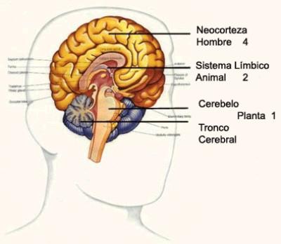 Cerebro - Mente - Conciencia – Filosofía para la vida