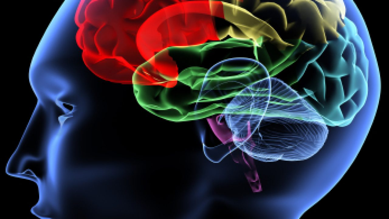 Los enigmas del cerebro – Filosofía para la vida