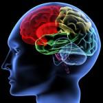 Los enigmas del cerebro