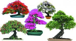 El bonsái, arte y naturaleza