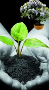 El cultivo del bons i filosof a para la vida - Cultivo del bonsai ...